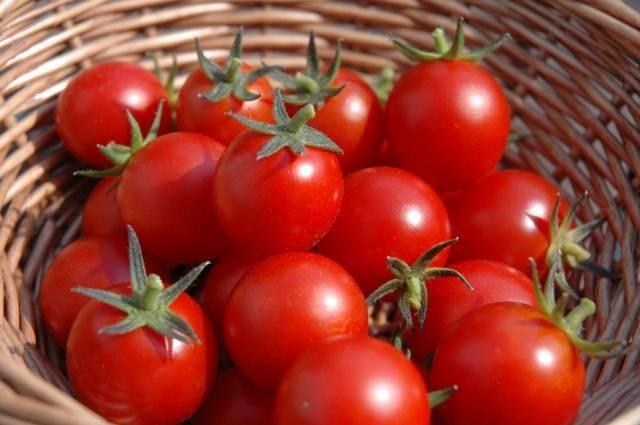 Описание и выращивание томата «яблонька россии» для открытого грунта