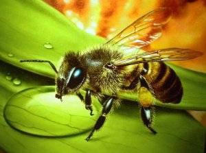 Осенняя подкормка пчел сахарным сиропом