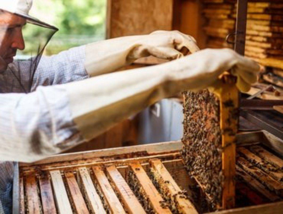 Пчеловодство в двухкорпусных ульях