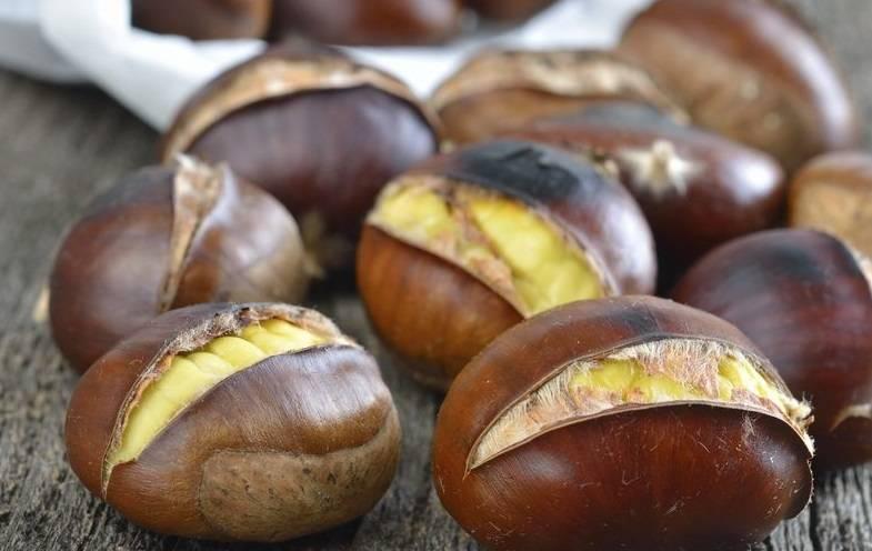 Конский каштан — лечебные свойства и противопоказания при варикозе