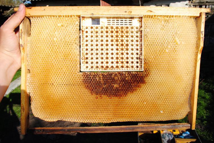 Вывод пчелиных маток по специальному календарю
