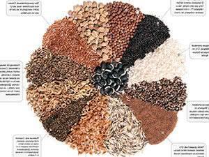 Как правильно подготовить семена перца к посадке