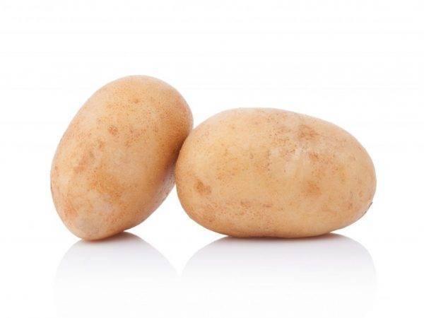 Картофель рогнеда описание сорта, характеристика, фото