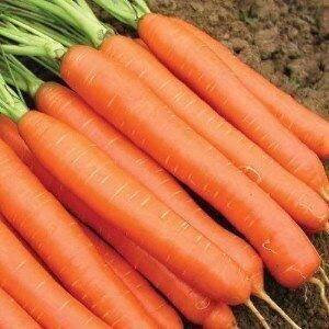 Топ-10 самых сладких и урожайных сортов моркови