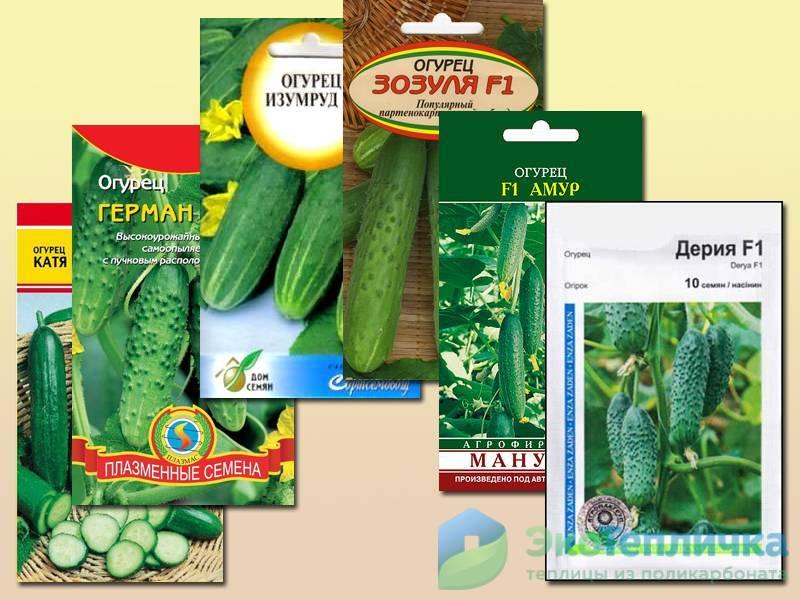 Лучшие сорта огурцов для теплицы из поликарбоната: отзывы садоводов