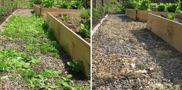 Какие посеять растения, чтобы земля на огороде отдохнула