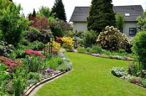 Соседство облепихи с другими растениями