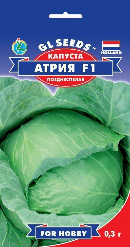 Характеристика и описание капусты атрия f1: правила ухода, борьба с вредителями