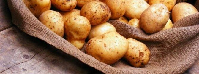 Картофель ирбитский: описание сорта, фото, отзывы, рекомендации по выращиванию, характеристика, урожайность - общая информация - 2020