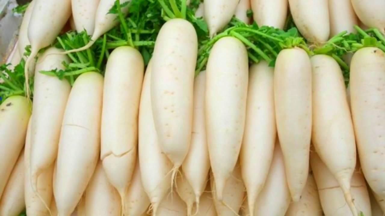 Что надо знать о посадке дайкона семенами в открытый и защищенный грунт? особенности ухода за овощем