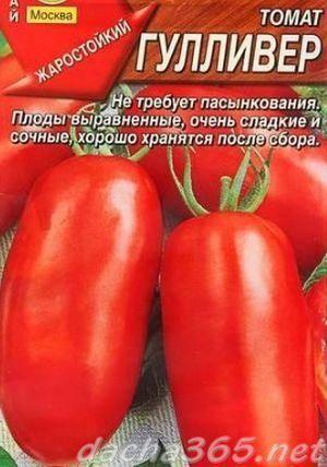 Сорт помидора «гулливер»: фото, отзывы, описание, характеристика, урожайность, видео