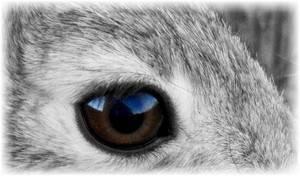 Глаза коровы: строение, цвет, болезни