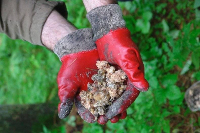 Живица сосновая противопоказания. мазь из сосновой живицы - рецепт приготовления в домашних условиях