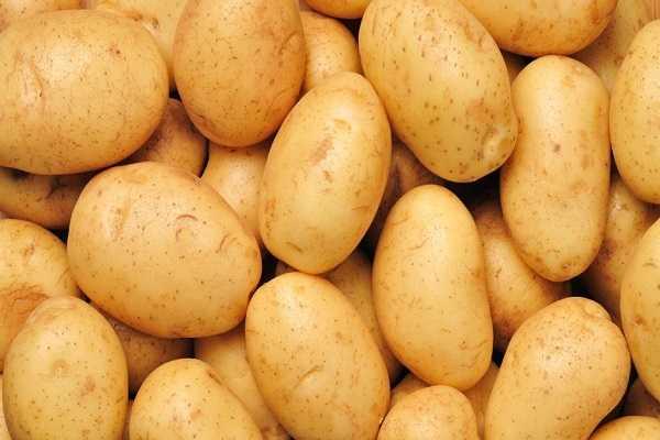 Картофель джувел описание сорта фото отзывы