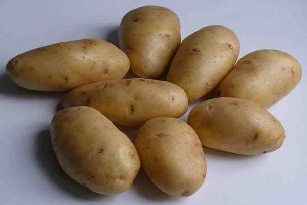 Картофель гулливер: описание и характеристика сорта, отзывы садоводов с фото