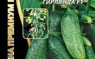 Огурец сибирская гирлянда: описание сорта, выращивание и формирование