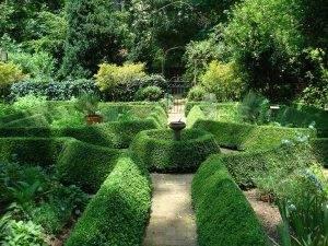 Посадка самшита и уход за вечнозеленым кустарником