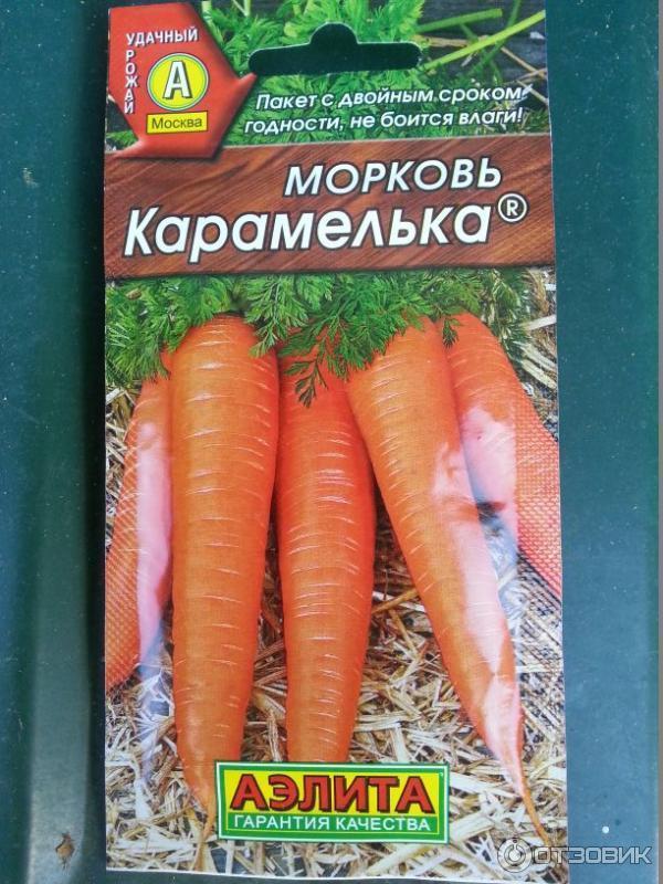 Морковь амстердамская: описание сорта, отзывы, фото