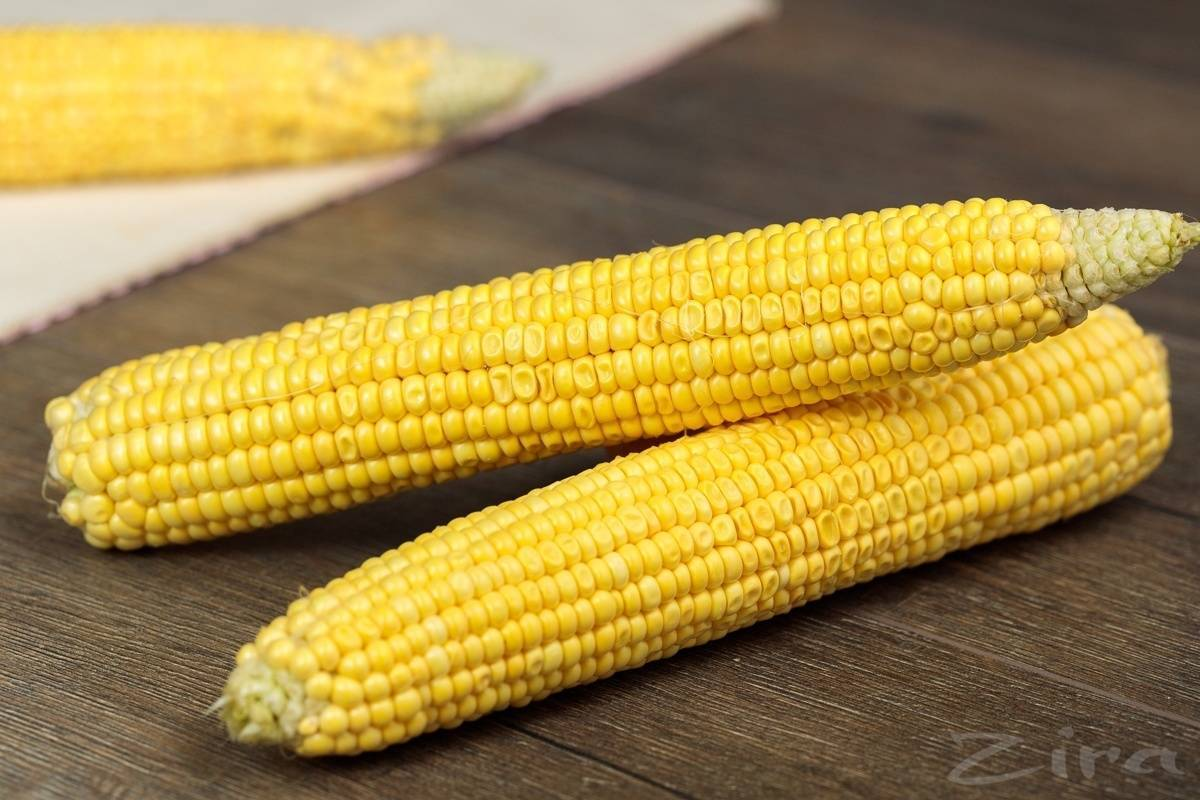 Кукуруза вареная. калорийность, польза, бжу, рецепты, как употреблять на диете