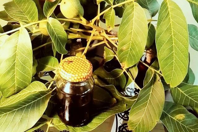 Листья грецкого ореха: полезные и лечебные свойства