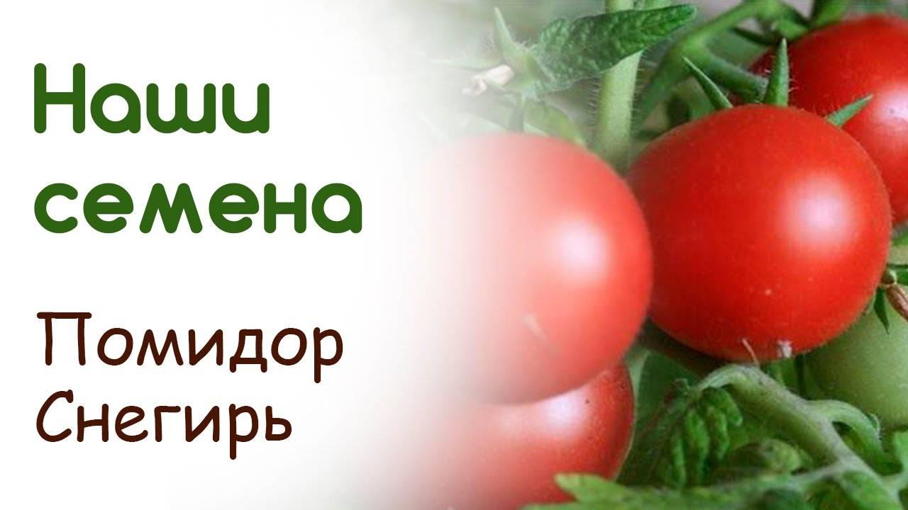 Томат «снегирь» — описание сорта, характеристика урожайности и агротехника посадки, уход и выращивание помидоров (фото)
