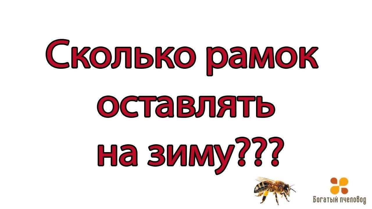 Сколько рамок с медом оставлять пчелам на зиму