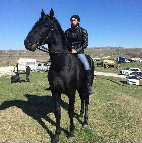 Кабардинская (горская) лошадь — история, описание породы, фото