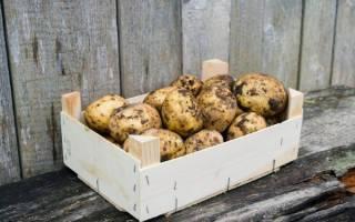 Какую картошку посадить? критерии выбора лучшего сорта картофеля