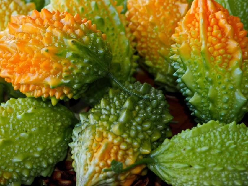 Лечебные свойства и противопоказания момордики, или китайской горькой дыни