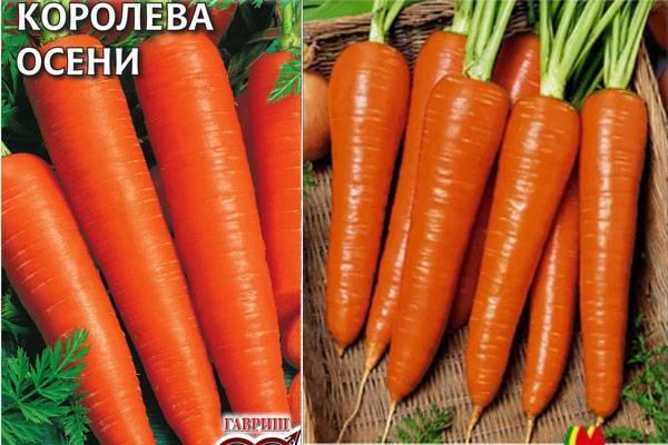 Описание и характеристика моркови «королева осени». достоинства сорта, отличия от других и выращивание