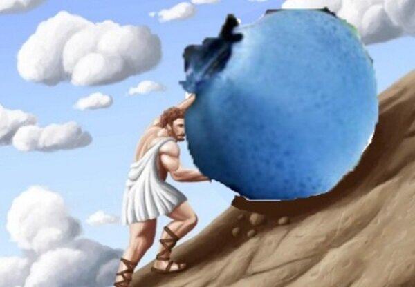 Голубика не плодоносит: причины, что нужно делать