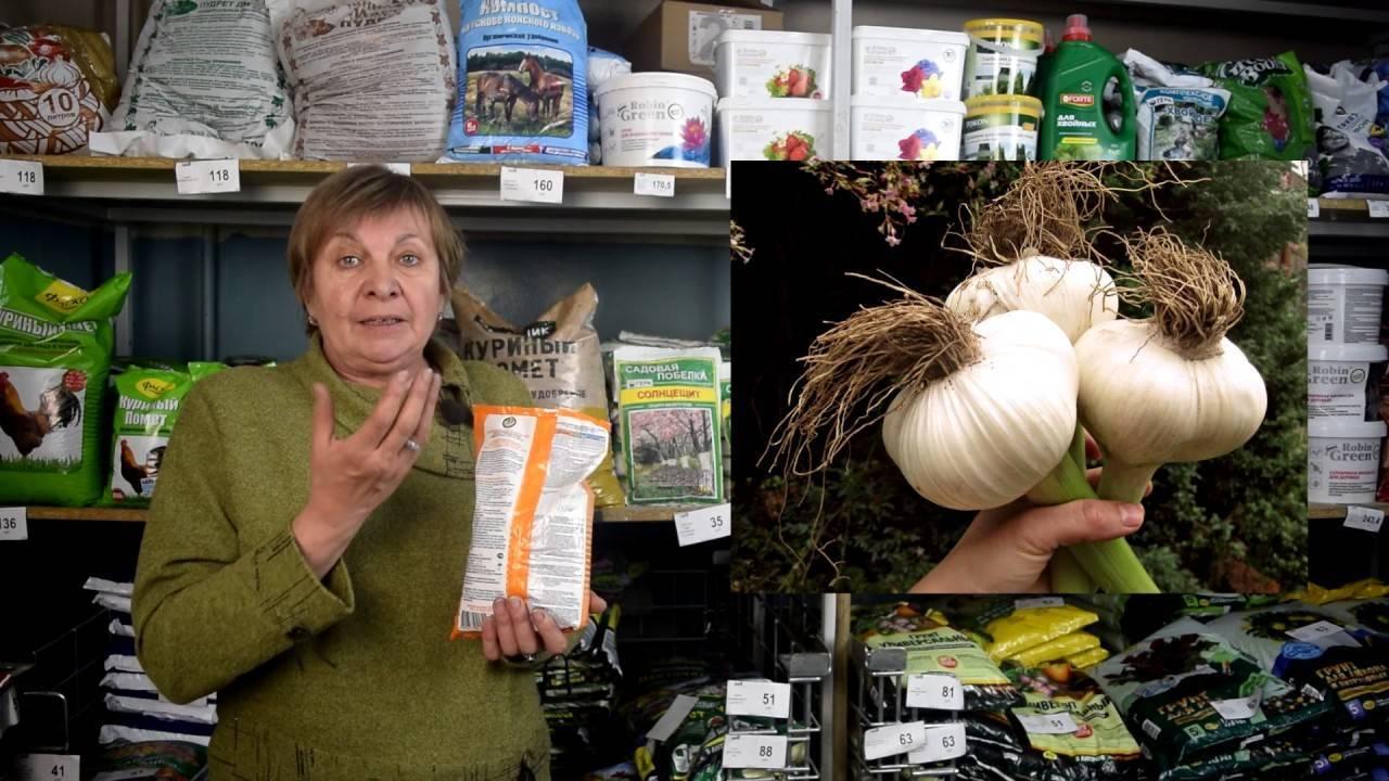Подкормка озимого чеснока весной: лучшие средства для удобрения