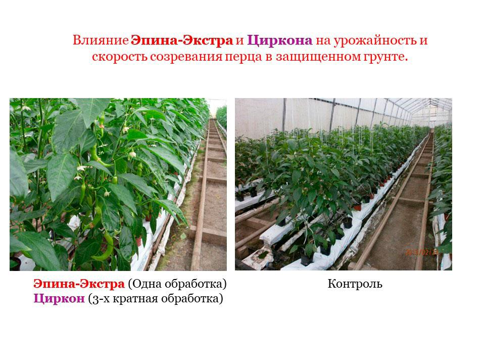 Удобрение Экофус: правила применения, отзывы, состав, срок хранения