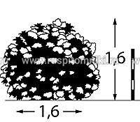 Гортензия метельчатая юник: описание, посадка и уход
