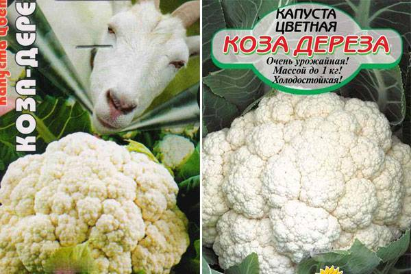 Описание и особенности выращивания цветной капусты коза-дереза