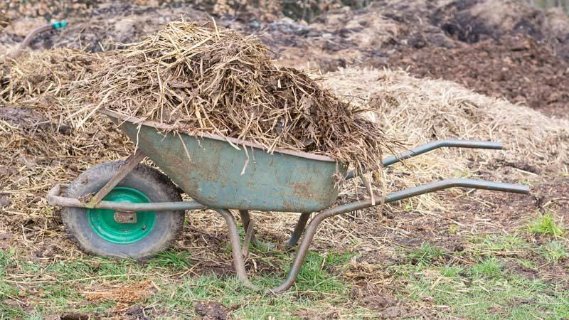 Козий навоз как удобрение: как применять, отзывы