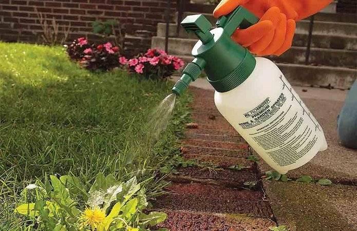 Дозировка и особенности применения гербицида ураган
