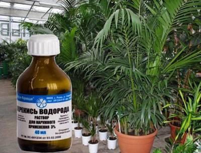 Перекись водорода для растений - ускоряем рост растений и улучшаем корневую систему при помощи этого средства. | садовый участок