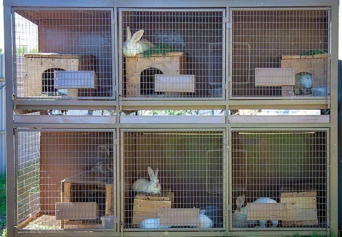 Как сделать двухъярусную клетку для кроликов + чертеж