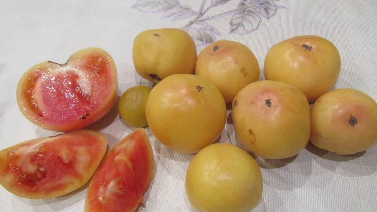 Характеристика сорта томатов чудо уолфорда