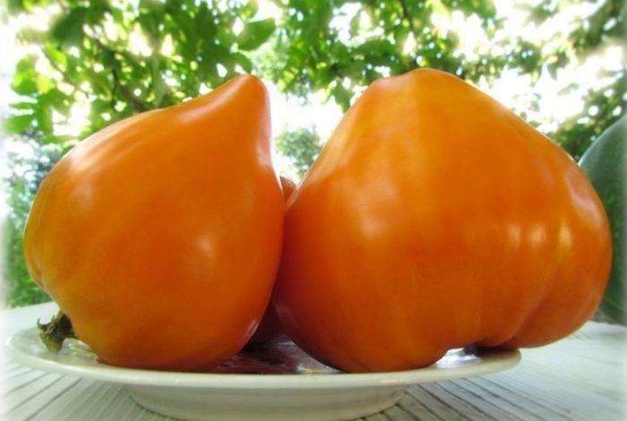 Томат «черри клубничный f1»: высокие вкусовые качества и стабильная урожайность