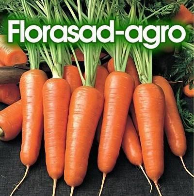 Морковь витаминная 6: описание сорта, фото, отзывы дачников об урожайности, рекомендации по выращиванию