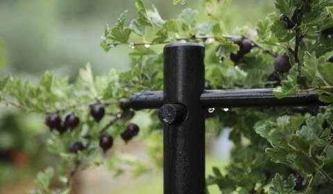 Как подвязать смородину и огородить кусты: делаем подпорки своими руками