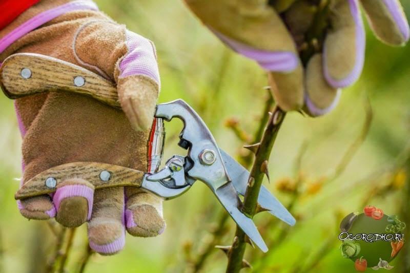 Пересадка флоксов осенью или весной на другое место