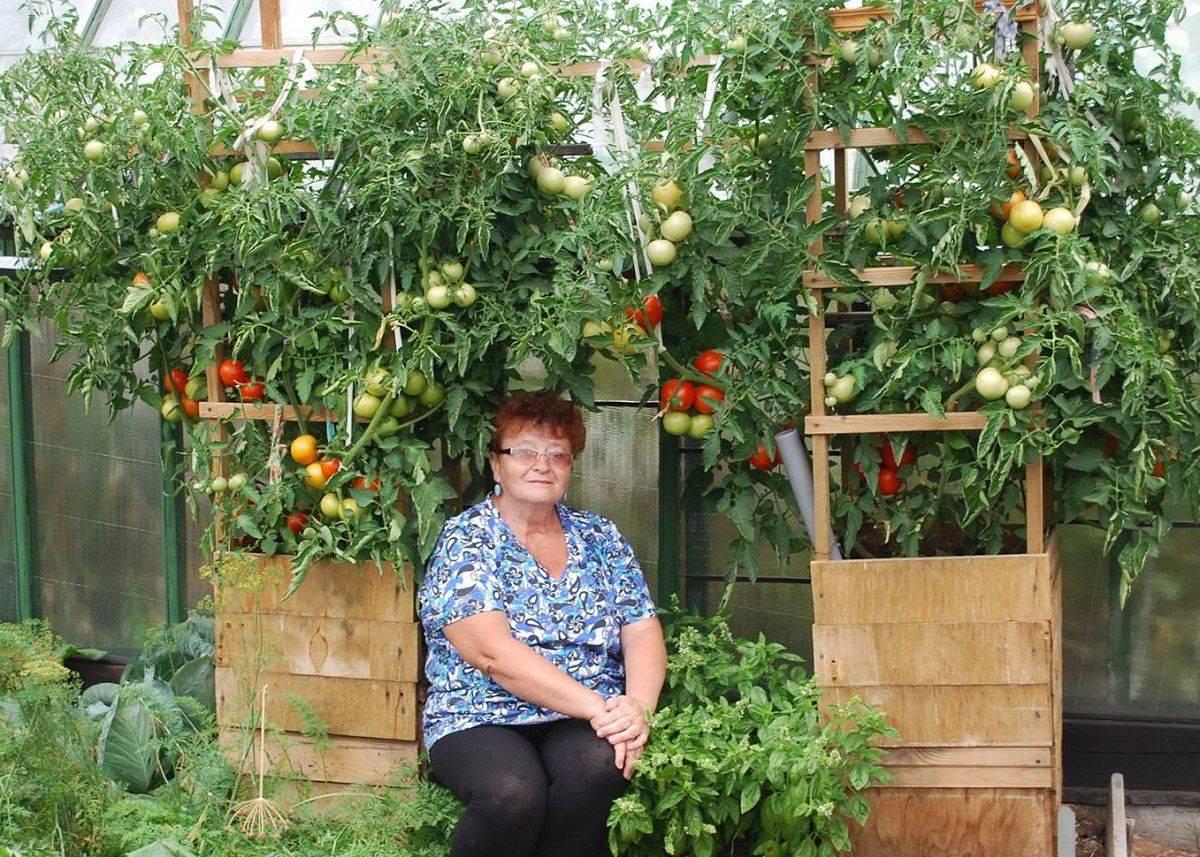 Выращиваем томат клубничное дерево: отзывы и особенности сорта