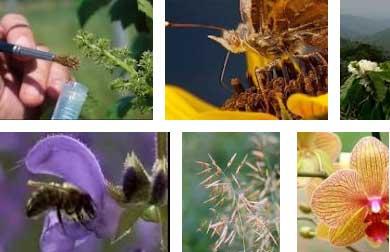 Опыление растений медоносными пчелами