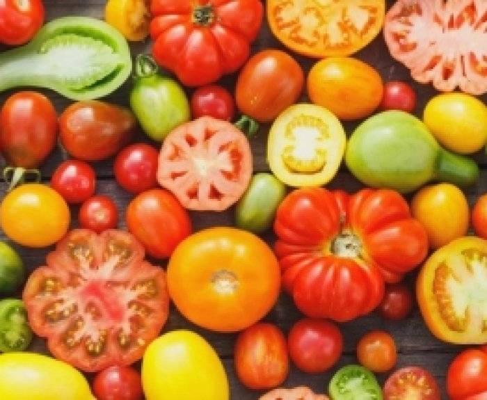 Семена томатов для Ленинградской области: сорта, выращивание