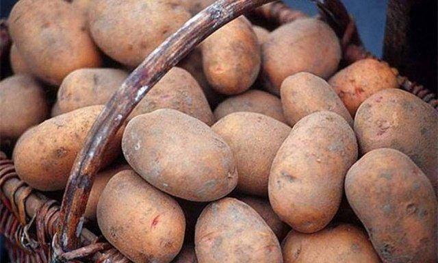 """Картофель """"славянка"""": описание сорта, фото и характеристики картошки"""