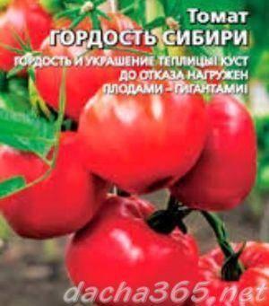 Помидоры гордость сибири: описание сорта с фото