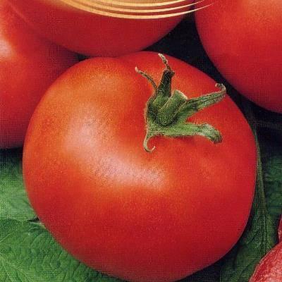 Сорт томата «дар заволжья»: описание, характеристика, посев на рассаду, подкормка, урожайность, фото, видео и самые распространенные болезни томатов